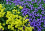 flowers_color_purple_220396_m
