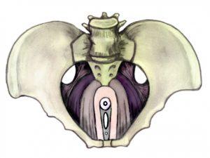pelvic