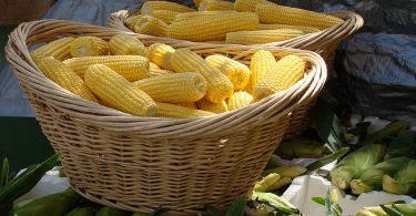 sweet-corn-in-basket