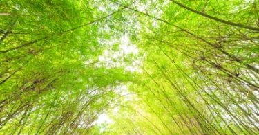"""Bamboo Arch Background"" by criminalatt"