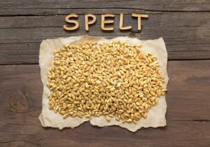 Raw Organic spelt grain with wooden word on a wooden background