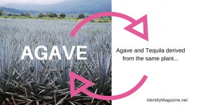 Is Agave Healthy